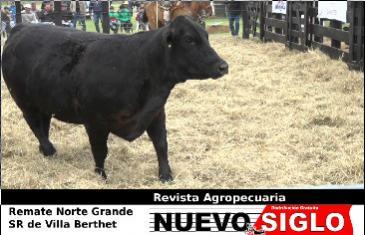 Remate ganadero Norte Grande en la Rural de Villa Berthet